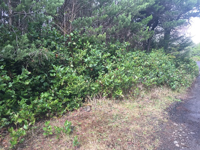 Wakonda Beach, Waldport, Waldport Oregon, Waldport Lot, Waldport Real Estate, Waldport Lot For Sale